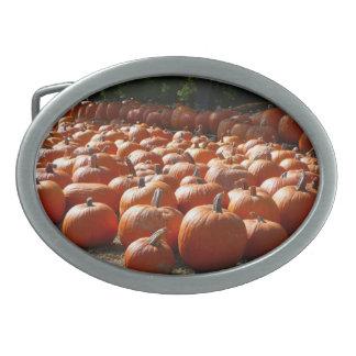 Kürbis-Flecken-Herbst-Ernte-Fotografie Ovale Gürtelschnallen