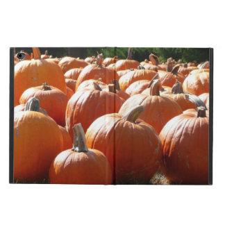 Kürbis-Foto für Fall, Halloween oder Erntedank