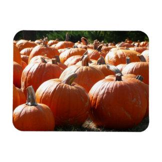 Kürbis-Foto für Fall, Halloween oder Erntedank Magnet