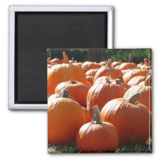 Kürbis-Foto für Fall, Halloween oder Erntedank Quadratischer Magnet