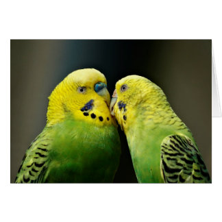 Küssen des Budgie Papageien-Vogels Karte