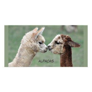 Küssen von Alpaka-Fotokarte Bildkarte