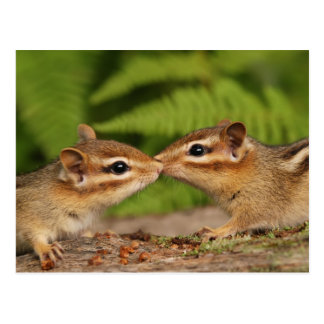Küssen von BabyChipmunks Postkarte