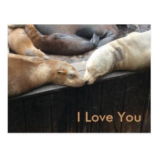 Küssende Seelöwen Postkarte