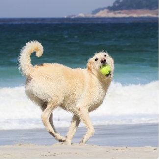 Labradoodle - glücklicher Tag auf dem Strand Freistehende Fotoskulptur