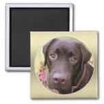 Labrador Magnet Kühlschrankmagnete