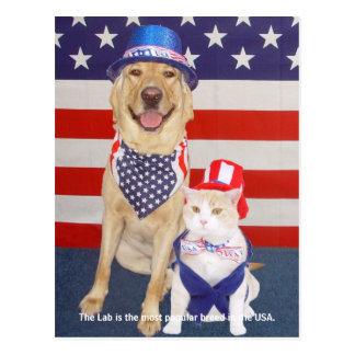 Labrador-Merkmale - populär Postkarte