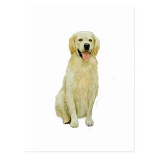 Labrador retriever - Gelb 1 Postkarte