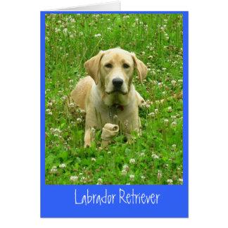 Labrador retriever karte