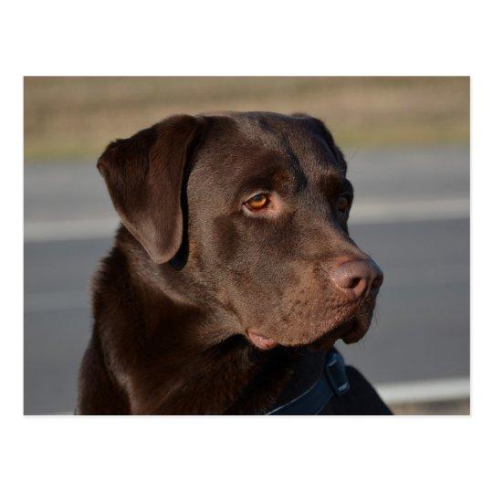 Labrador Retriever Lorenzo Postkarte