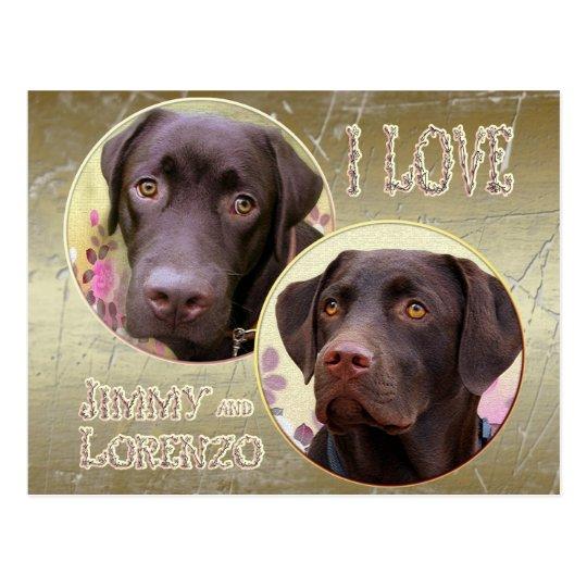 Labrador Retriever Postkarte
