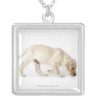 Labrador retriever-Welpengehen Versilberte Kette