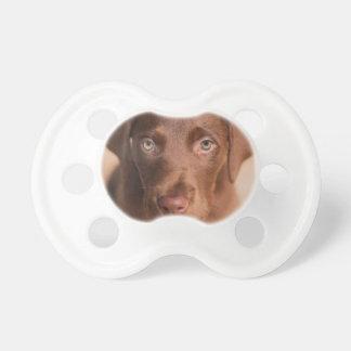 Labrador Schnuller