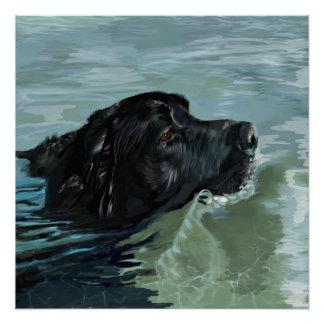 Labrador-Schwimmen Poster