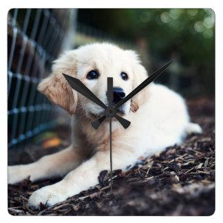 Labrador-Welpe, der im Garten spielt Quadratische Wanduhr