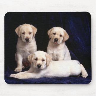 Labrador-WelpenMausunterlage Mousepad