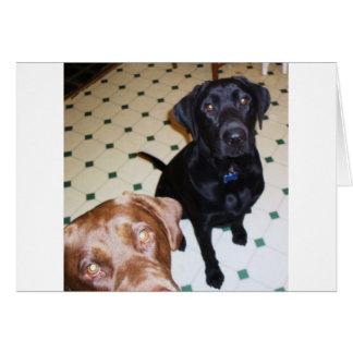Labradorretriever, -vater und -sohn karte