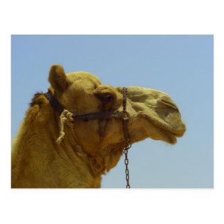 Lächeln - Kamelkopf mit blauem Himmel Postkarte