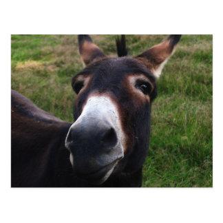 Lächelnde Esel-Postkarte