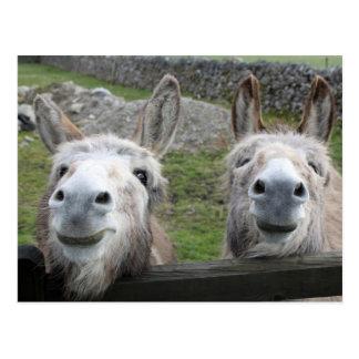 Lächelnde Esel! Postkarten