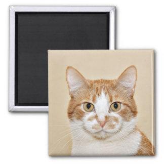 Lächelnde Katze Quadratischer Magnet