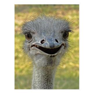 Lächelnde Strauß-Postkarte 2 Postkarte