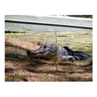 Lächelnder Alligator - Postkarte