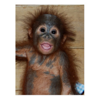 Lächelnder Baby-Orang-Utan in den Windeln Borneo Postkarte