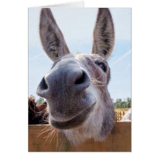 Lächelnder Esel mit albernem Grinsen Grußkarte