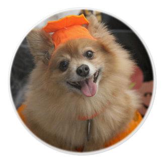 Lächelnder Foxy Spitz-Welpe im Kürbis Halloween Keramikknauf