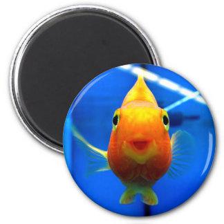 Lächelnder Goldfisch-runder Magnet