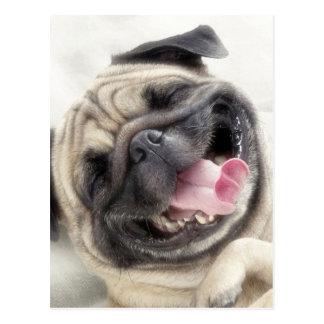Lächelnder Mops. Lustiger Mops Postkarte