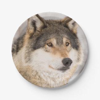 Lächelnder PapierTeller des freundlichen Wolfs
