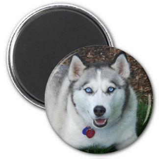 Lächelnder sibirischer Husky Runder Magnet 5,7 Cm