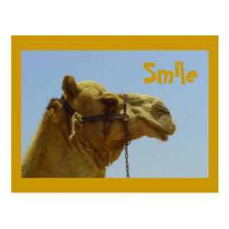 Lächelndes Kamel im Profil Postkarte