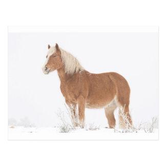 Lächelndes Palomino-Pferd im Schnee Postkarte
