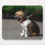 Lachende Chihuahua Mauspad