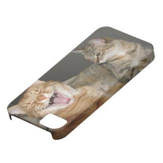 """""""Lachende Katze"""" iPhone 5/5S, kaum dort iPhone 5 Etuis"""