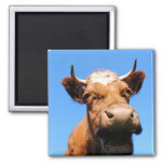 Lachende Kuh Quadratischer Magnet