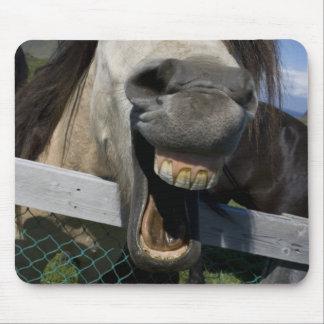 Lachendes Pferd Mousepads