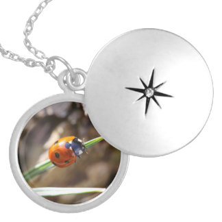 Ladybug - Lucky charm Anhänger