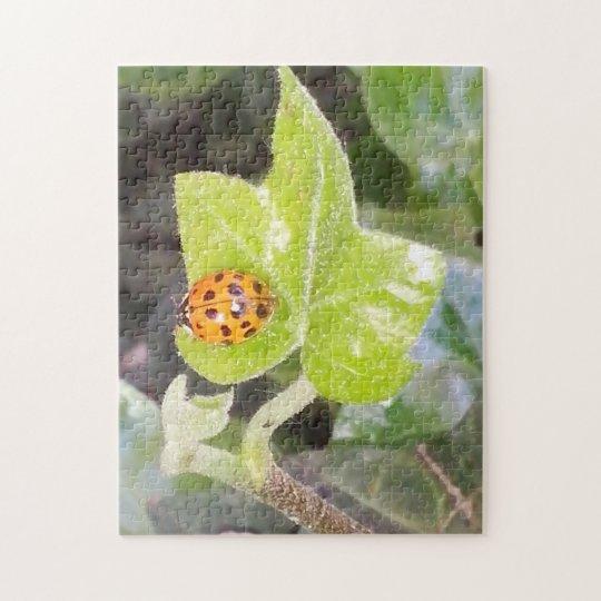 Ladybug Marienkäfer Puzzle