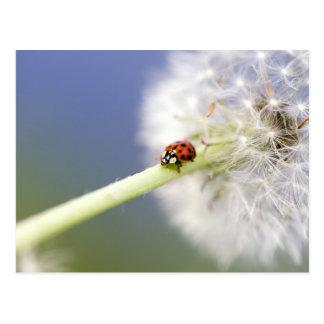 Ladybugs & Dandelion Postkarte
