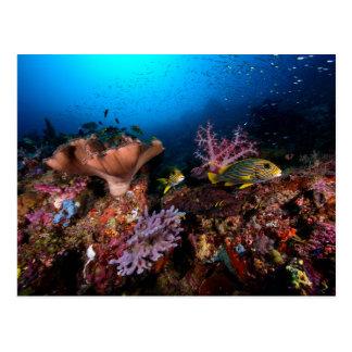 Laja Ampat Unterwasser Postkarte