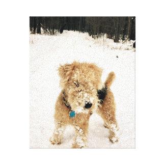 Lakeland-Terrier-Leinwand-Druck Leinwanddruck