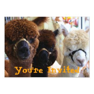 Lama-Lama-Einladung