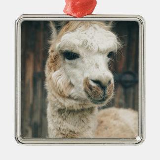 Lama-nahes hohes quadratisches silberfarbenes ornament