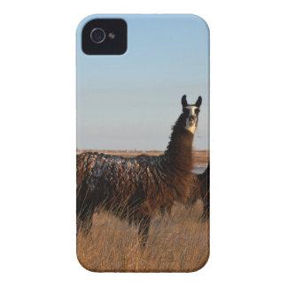 Lama-Wächter iPhone 4 Cover