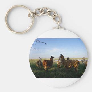 Lamagruppe Schlüsselanhänger