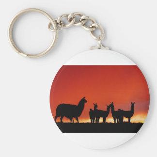 Lamas am Sonnenuntergang auf dem Grasland Schlüsselanhänger